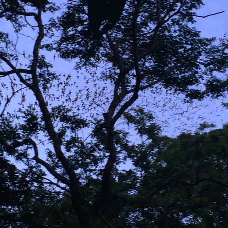 Bats Cenote Mexique
