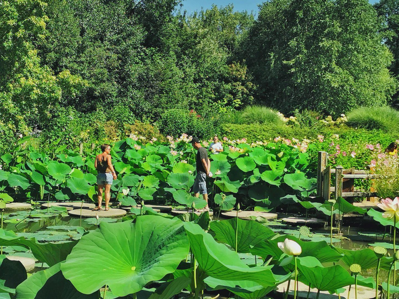Jardins des Martels Giroussens - bassin aux lotus