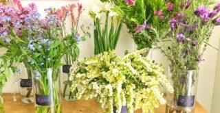 fleurs peonies paris